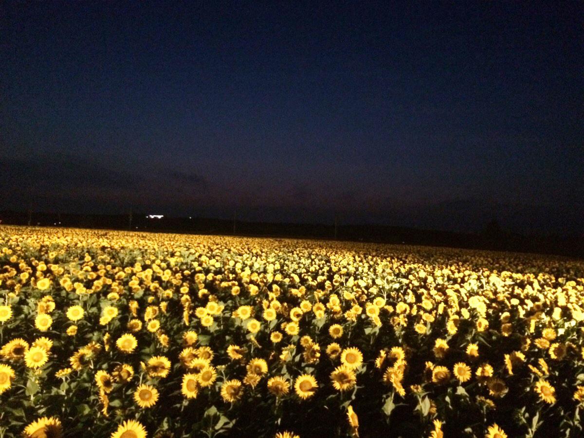 夕刻のひまわり村