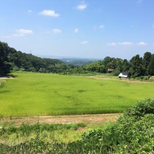 大窪の田園風景です。