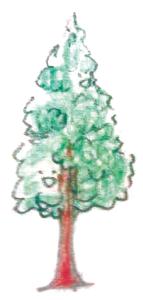 木補正済み